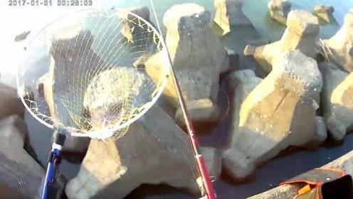 海钓黑鲷鱼,离岸有点远,遇到大物就麻烦了
