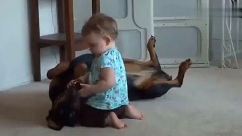 宝宝是家里的宝贝,怎么样狗狗也不能动手的