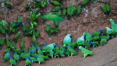 """印度大叔被称为""""鸟王"""",每天引来2000多只鹦鹉,赶都赶不走"""