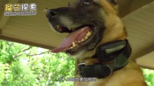 观念碰撞!上一辈要求咬人的狗必须打死,是什么原因导致的呢?