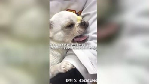 3岁小母狗绝育手术结束后 ,钻进医生怀里发出婴儿般哭声