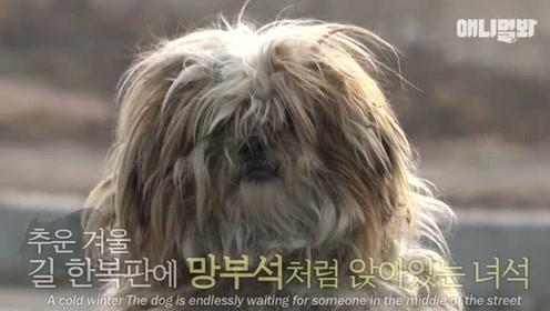 狗狗被遗弃在马路上,它在无休止的等待主人