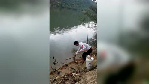 野河这样的地方,鱼真有那么多吗?三根海竿同时中鱼