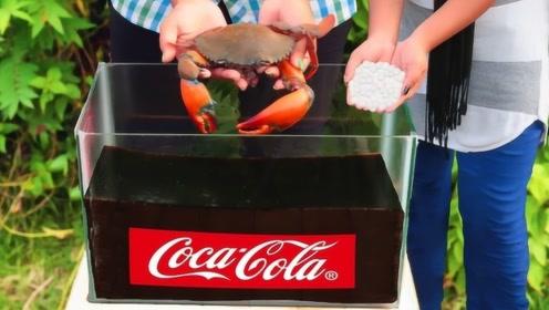 老外奇葩实验,将螃蟹放进可乐中,网友:这螃蟹确定不是熟的?