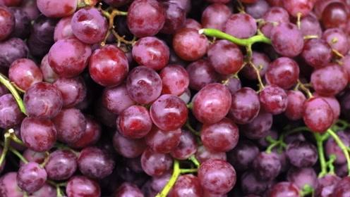 这水果维C含量高堪比苹果,常吃促进身体免疫