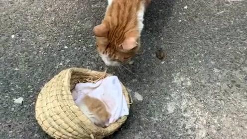 听说小野猫身上有了人的味道,它妈就不要它了,事实证明果然如此!