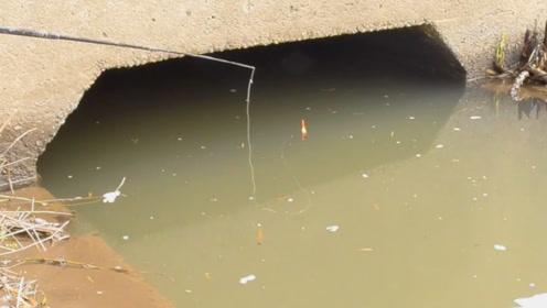 钓鱼:小水沟里有好鱼情,一条条鲫鱼被钓上来