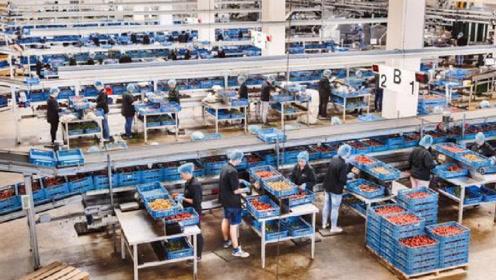 中国粮食靠进口,这个弹丸小国却在养活全世界,人均土地不足2亩