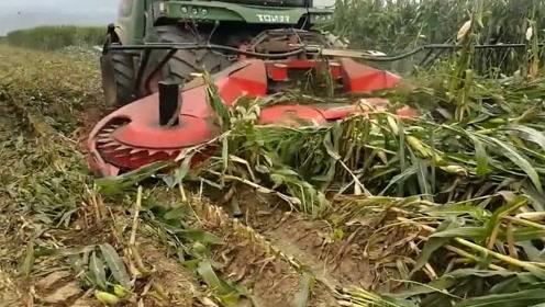 强大的机器走过,玉米秸秆全部被粉碎