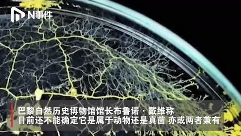 """巴黎动物园将展出神秘生物""""黏菌"""",网友:现实版毒液"""