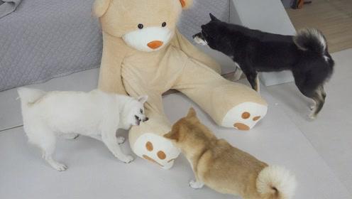趣味萌宠:主人和狗狗玩游戏,哈哈