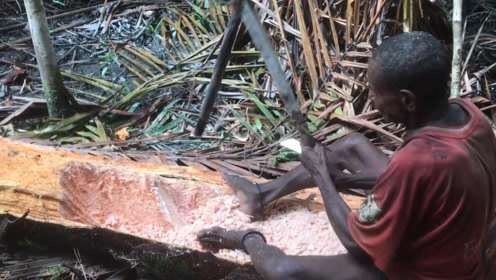 树上还能长大米,一颗树能产数百斤粮食,可惜在国内无法引进