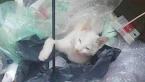 男子在垃圾桶里捡到一只流浪猫,越养越不对劲,兽医:赚大了
