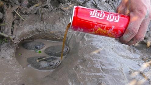 可口可乐也能钓鱼?小伙用实际行动颠覆你的认知!
