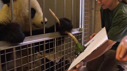 大熊猫在国外挥毫泼墨,一幅画卖3900美元,不愧是国宝