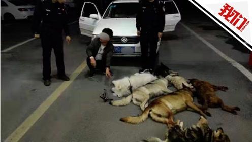 民警化身汪星人救星 实拍警方追捕偷狗贼惊险现场
