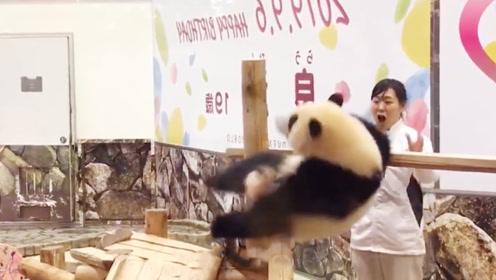 熊团子爬到木架上不肯下来,奶妈跑去劝阻,结果悲催了