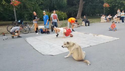 """这只流浪狗身体里住着一个""""舞王""""啊!路过的人纷纷停下围观"""