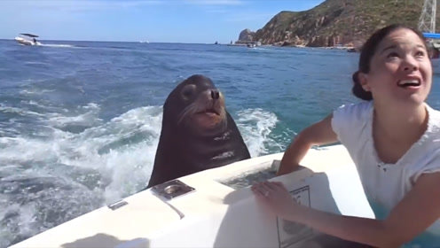厚脸皮海豹趴在船上不下去,只为了让美女喂它鱼吃,真是太有心机
