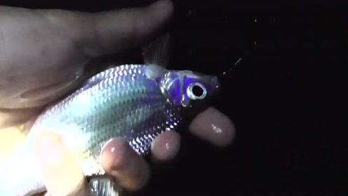 10月第一次夜钓,连杆翘嘴,鲫鱼,3小时收获了10余条