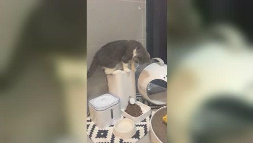 我家的猫咪成精了