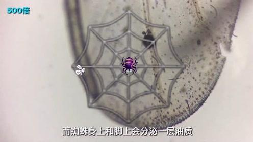 一根蜘蛛丝用显微镜放大2000倍能看到啥?