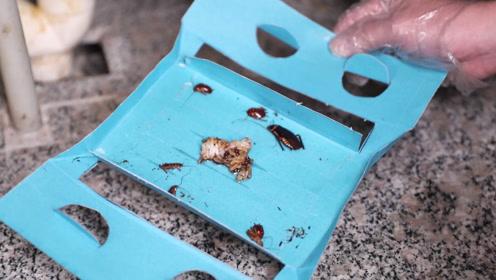 灭蟑螂记住别用脚踩,只需一张纸,抓蟑螂高效又环保,又学会一招