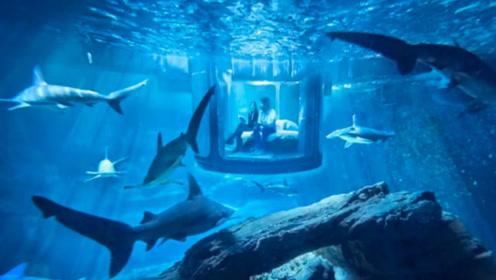 世界上最可怕的客房,和35条大鲨鱼一起睡觉,你敢住吗
