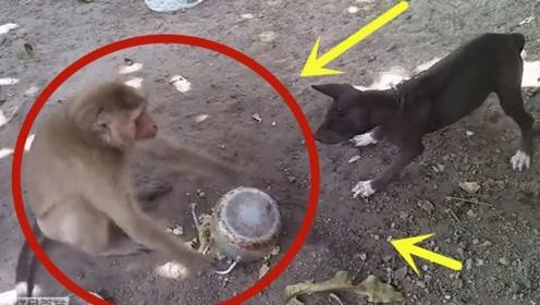 """黑狗正在吃饭,""""泼猴""""一脚将饭盆给踢翻了,狗子气得发抖!"""