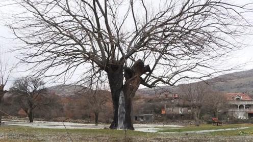 欧洲神秘喷泉树,每天不停喷水,网友:喝吐了!?