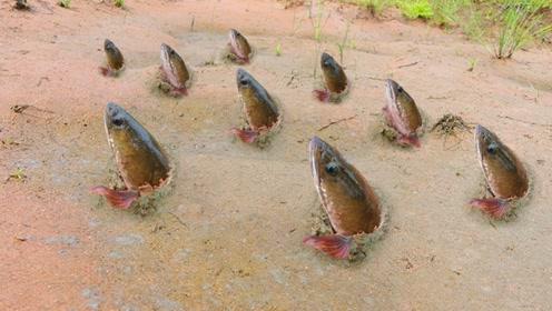 地里居然长出了鱼?男子徒手挖开泥土,鱼儿自己就冒了出来
