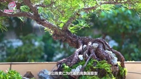 谭广颐丨盆景中幻化天地