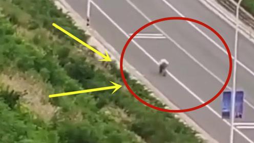说出来你可能不信,轿车在路上被自行车超了,死活追不上!