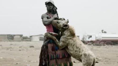 非洲人是怎么驯服鬣狗的?看完这一分钟视频,不得不佩服