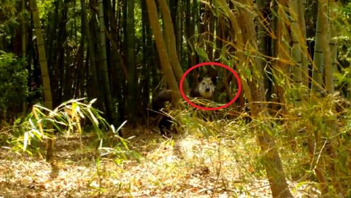 """男子在竹林发现一匹""""马"""",激动拍下照片,得知真相后一阵后怕"""