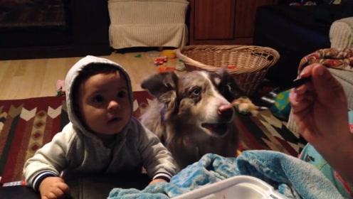 主人教宝宝叫妈妈,一旁的狗狗先学会,小主人反手怒锤狗头