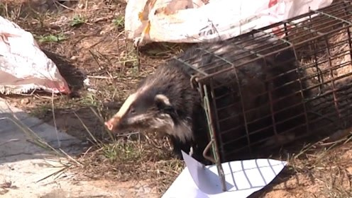 非法狩猎案牵出贩卖窝点 600余只省级重点野生动物放归