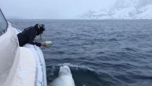 """船员与白鲸""""玩橄榄球"""" 场面让其同事目瞪口呆"""