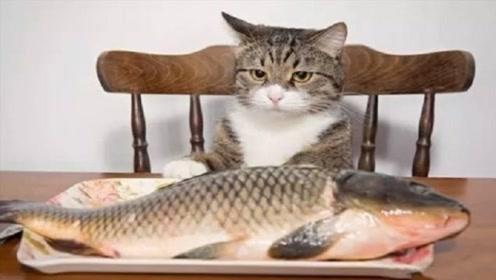 猫吃鱼为什么不怕卡刺?镜头放慢50倍,看完大开眼界!