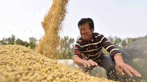 中国一年进口9000多万吨大豆,印度人口也多,为何还有豆粕出口?