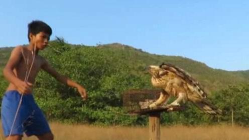 国外小伙用母鸡做诱饵,上演徒手抓老鹰,镜头记录激烈全过程