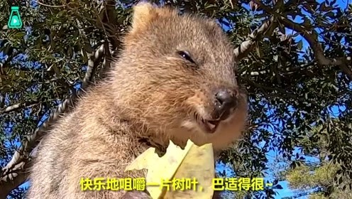 澳洲硬汉解说小动物们的放松时刻,真是太舒服了呀