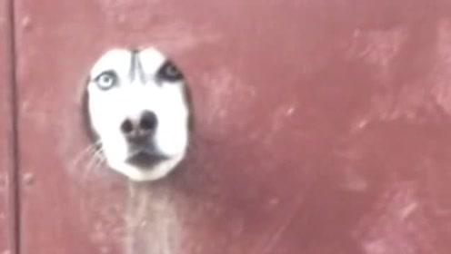最专业的的看门狗!二哈:有事请按门铃!