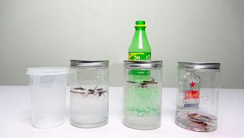 汽水,酒精,白水,蟑螂最不怕哪个?效果出奇的好