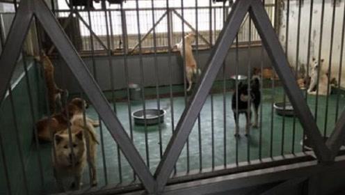 中国大街上那么多流浪狗,日本却很少?日本处理流浪狗的手段令人发指