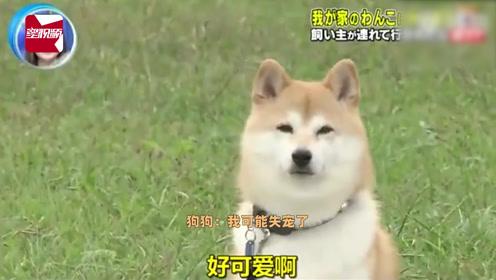 日本爆笑综艺!当主人被坏人抓走时,狗狗居然只是看着?
