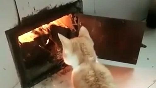 为什么都说好奇害死猫,看到接下来的事情,我瞬间就明白了!
