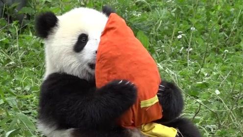 大熊猫抱着假胡萝卜,啃半天啃不动,隔着屏幕都要笑喷了