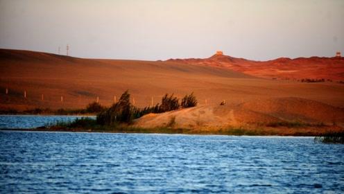 中国沙漠种树,以色列沙漠建鱼塘,年产1700吨,吃不完还能出口?
