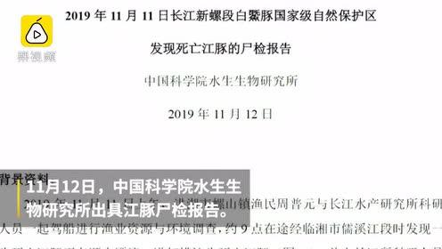 长江又现死亡江豚:尸体留下多处划痕,湖南猝死漂到湖北